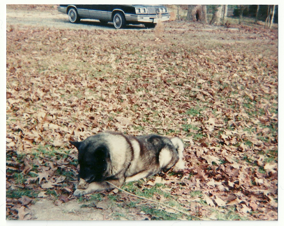 Photos I Took When I Was 5 - Virginia - Tina Take My Photo (9)