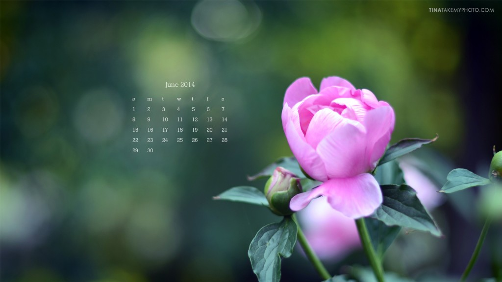 June-2014-Desktop- Calendar_Tina-Take-My-Photo_Peony-Bud