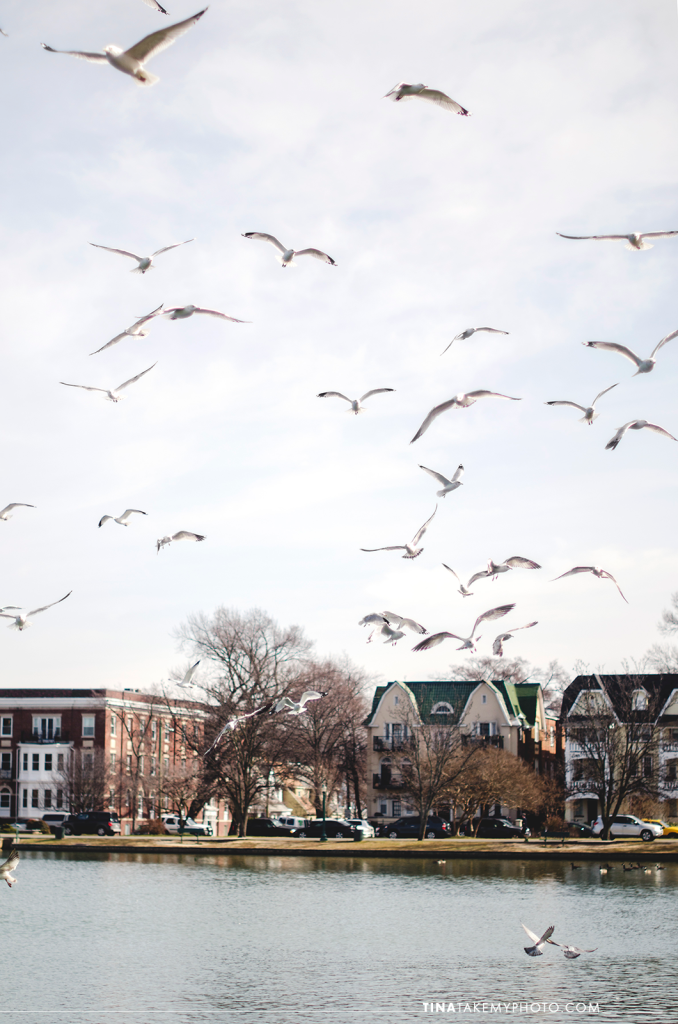 Richmond-RVA-Family-Photography-Session-Byrd-Park-Winter-Seagulls-Pigeons-Fountain-Lake-14