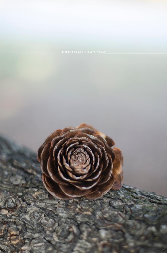 Richmond-RVA-Photography-Byrd-Park-Winter-Fountain-Lake-Pinecone-Flower-Rose-Bokeh-50mm