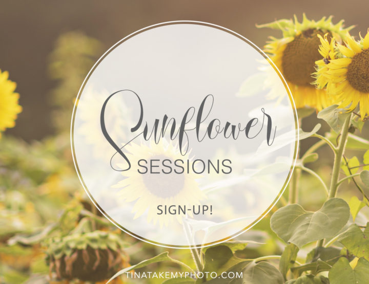 Sunflower Sign-Ups!